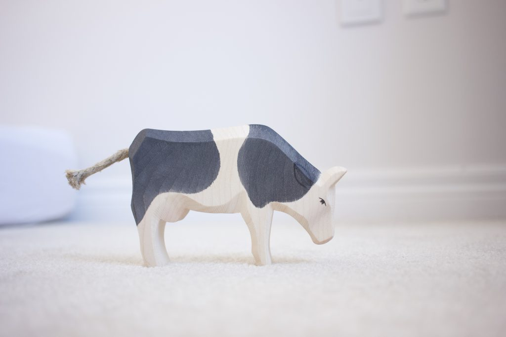 Ostheimer Cow eating